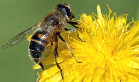 Sabe la abeja la flor en que libar